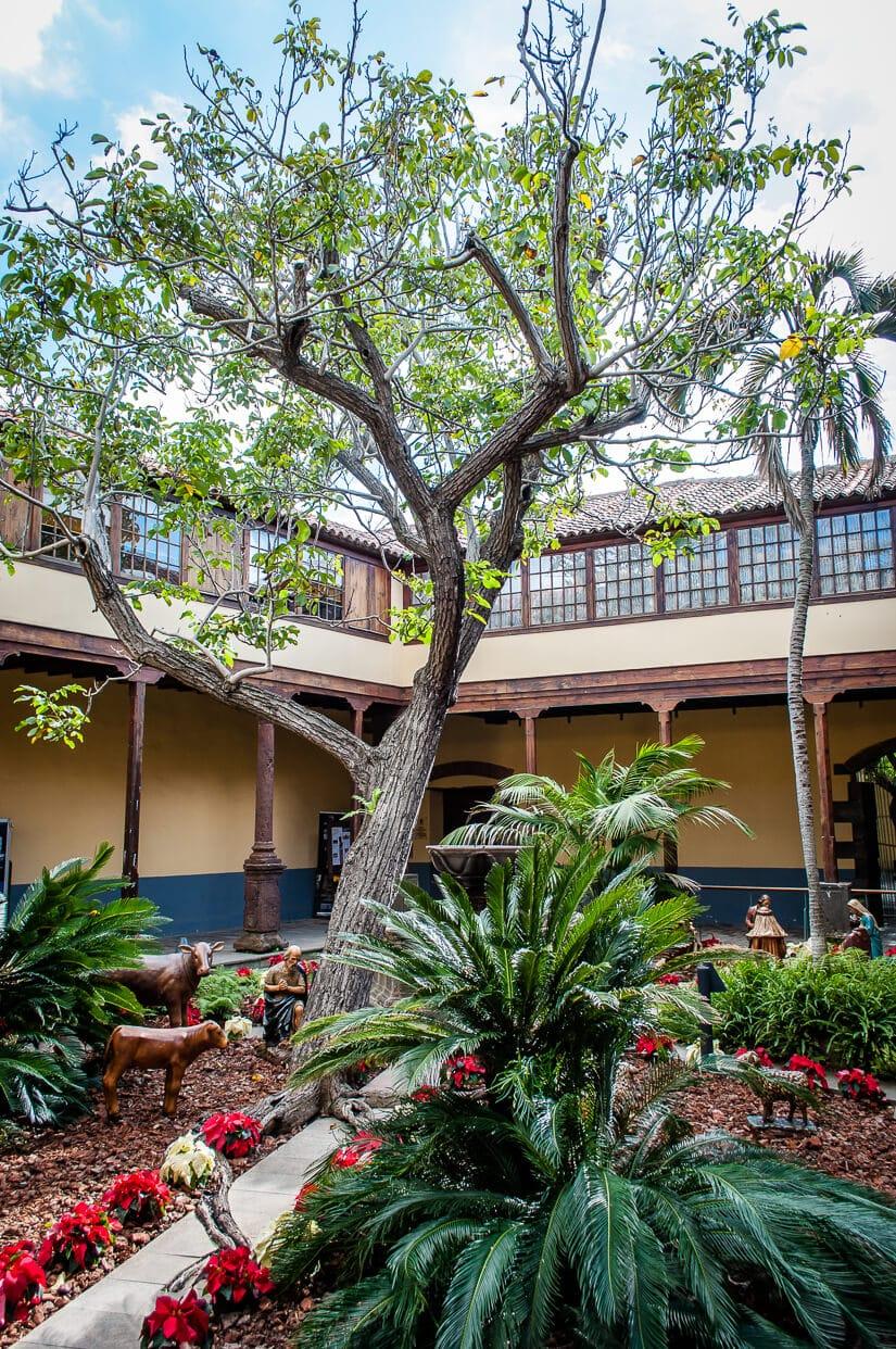 Garden in the patio of Casa de los Capitanes Generales in La Laguna, Tenerife