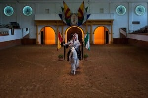 Dancing Horses were visited while staying at Arcos Gardens fractional property