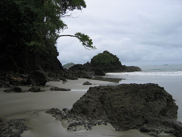 Spot wildlife at Costa Rica's Manuel Antonio National Park