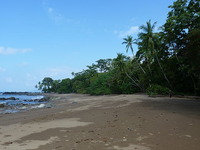 Costa Rica's Osa Peninsula is a haven for marine wildlife