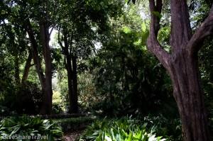 Jardin Botanico, Puerto de la Cruz, Tenerife