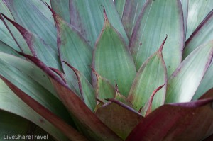 Leaves of tropical plant, botanical gardens, Tenerife