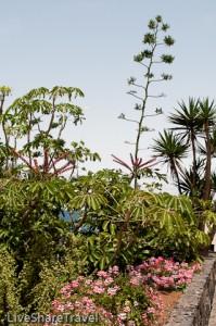 Palm trees, tropical plants and flowers line paths at Playa Jardin in Tenerife's Puerto de la Cruz