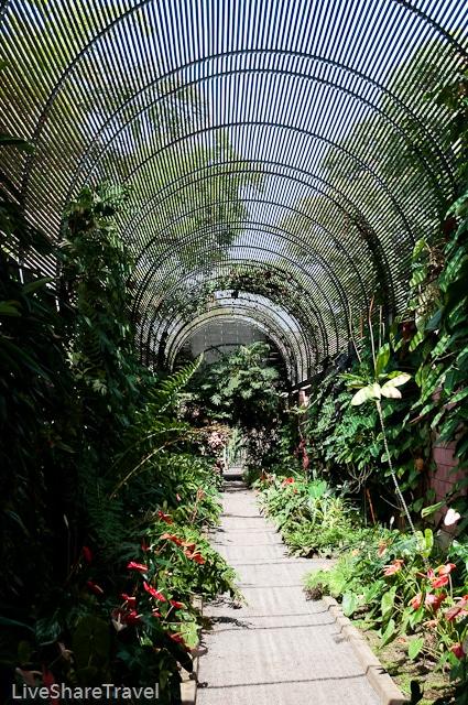 Puerto de la Cruz's botanical gardens, Tenerife
