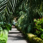 Shady paths through Puerto de la Cruz's botanical gardens