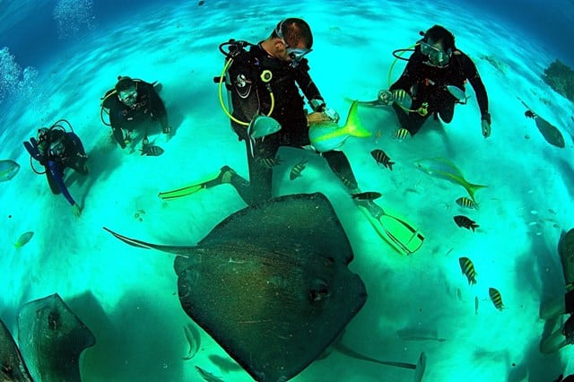 The Cayman Islands are renowned as a divers paradise, Stingray City, Cayman Islands