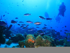 Try dive – my first ever scuba experience