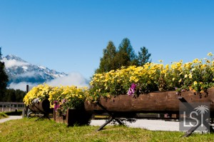 Summer flowers in Austrian Spa town of Seefeld