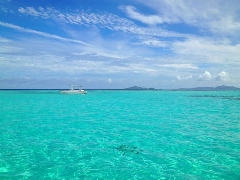 A turtle glides beneath the gentle waves at Tobago Cays, St Vincent and The Grenadines