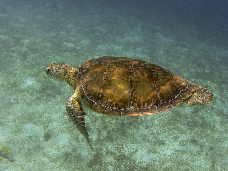 My friend the turtle, Tobago Cays, St Vincent and The Grenadines