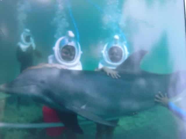 Swimming with dolphins while staying at Sandals Grande Riviera