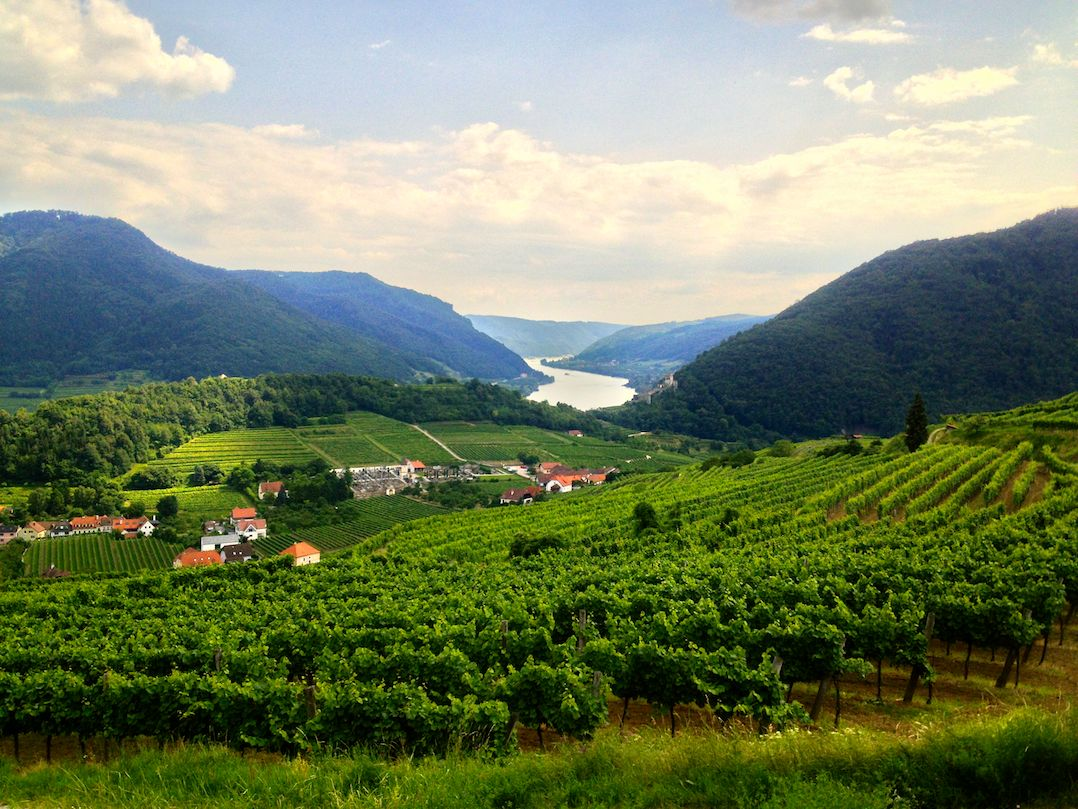 Austrian wine, apricots and art in a World Heritage landscape