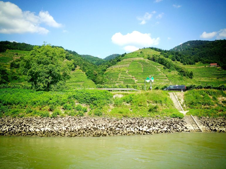 The thousand-year-old vine terraces that make up the Wachau Cultural Landscape - a UNESCO World Heritage Site