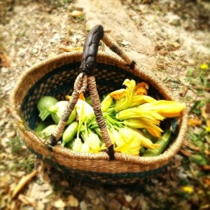A basket of goodness