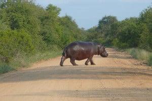 Enjoy a safari on a holiday exchange