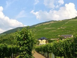 Rooms with personality and vineyard views in Lower Austria