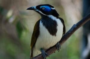 The wonderful bird life