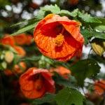 Flowers at Melbourne's Royal Botanic Gardens