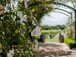 Confessions of a gardening virgin: how Victoria's gardens grew on me