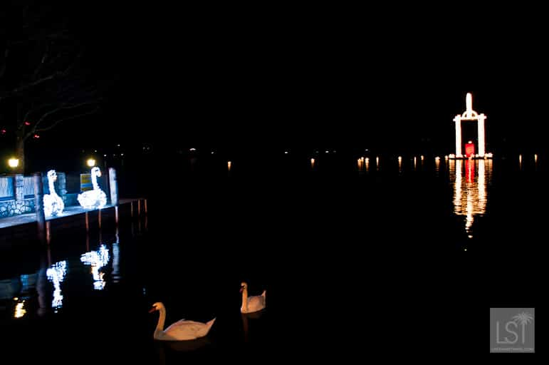 Places to go for Christmas holidays - swans on Lake Wolfgang with its festive lantern in the background