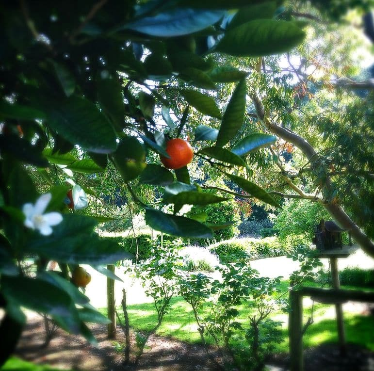 The gardens at Tussie Mussie were home to everything from grapes to roses and kumquats