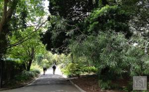 Wandering Melbourne's Royal Botanic Gardens