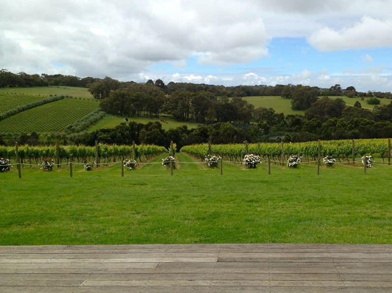 A grape early warning system. Roses are grown alongside vines in Mornington Peninsula