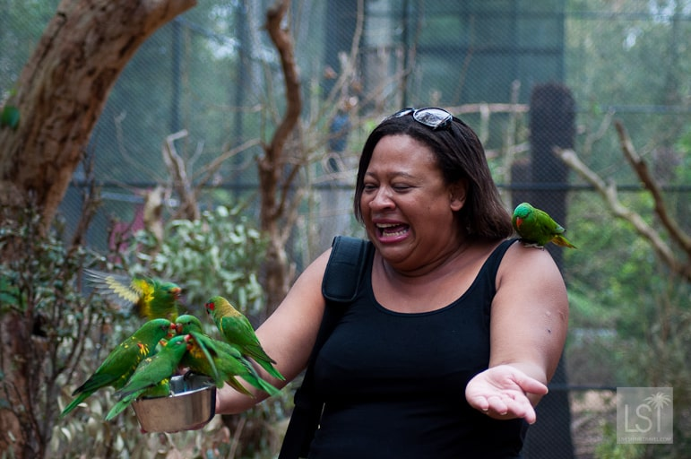 Feeding the birds at Healesville Sanctuary in Yarra Valley