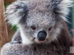 Australia's Yarra Valley is a trio of treats