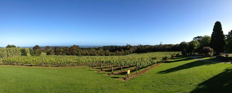Vineyard at Red Hill Estate, Mornington Peninsula