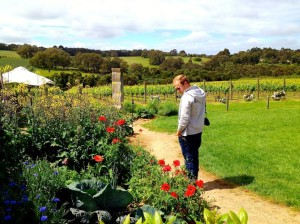 Wandering the gardens at Montalto Vineyard & Olive Grove