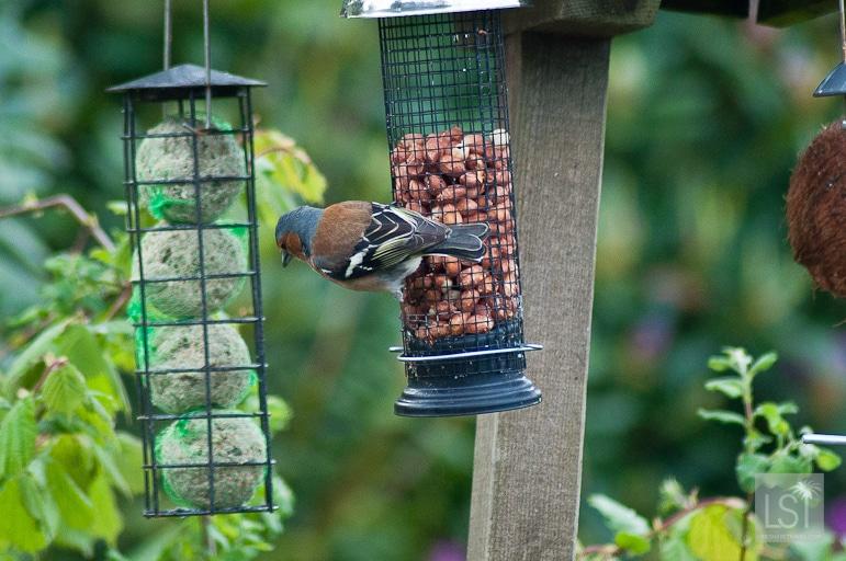 Birds feeding at Quarry Cottage, Melfort Village