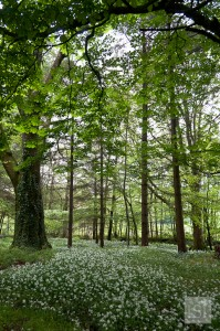 Flower strewn woodlands at Melfort Village