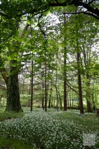Flower strewn woodlands at Melfort Village