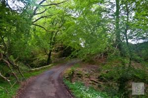 Wilderness around Melfort Village