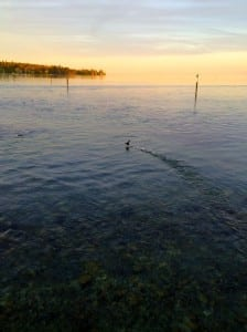 Bird at sunset over Lake Constance