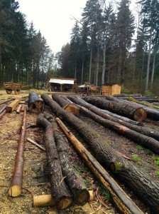 Logs chopped and ready for construction at Campus Galli