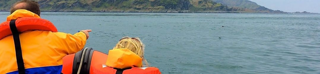 Spotting porpoises in the Firth of Lorn