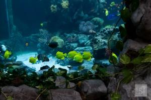 Shoals of exotic fish in the hotel aquarium