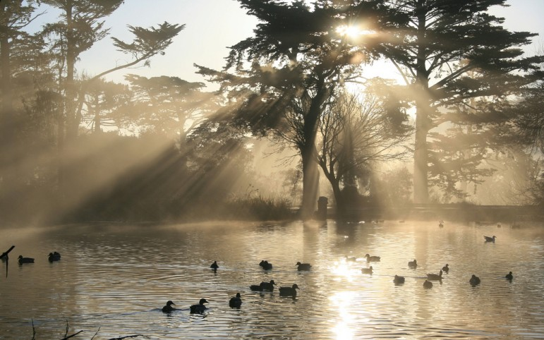 Golden Gate Park in San Francisco. Pic: Jim Trodel