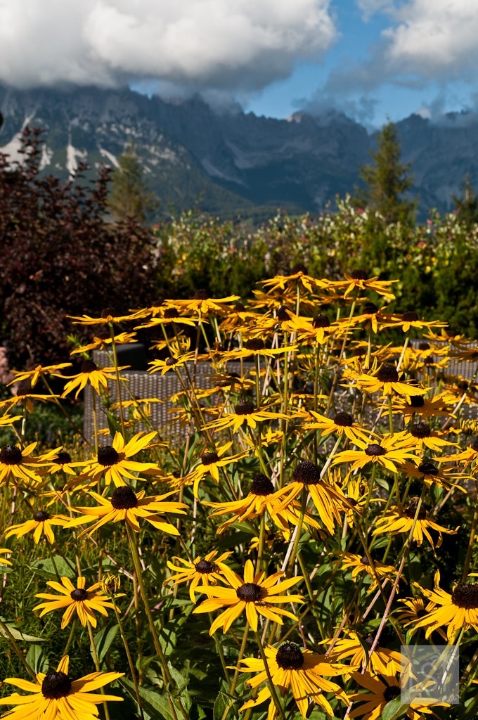 Mountain flowers at one of the most luxurious hotels in Austria