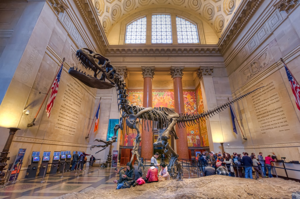 Places to go in New York - spend a night at the American Museum of Natural History