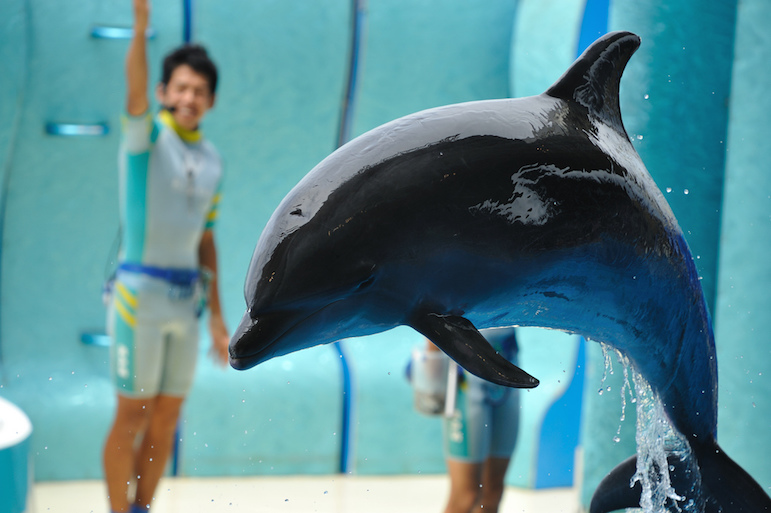 How to travel and stay animal friendly - avoid dolphin shows