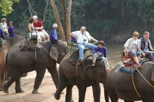 How to travel and stay animal friendly - avoid elephant trekking