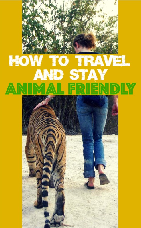 How to travel and stay animal friendly