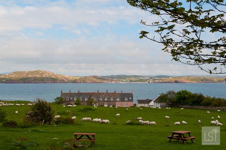 Peaceful pastures in Iona, west coast of Scotland