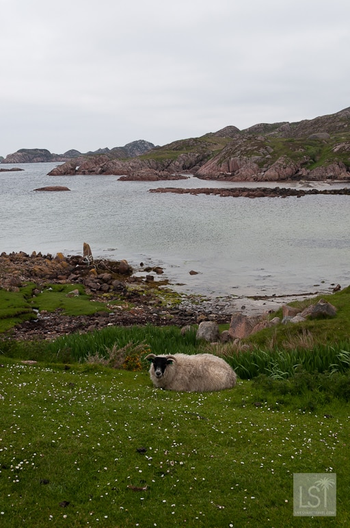The Isle of Mull reveals the rugged west coast of Scotland