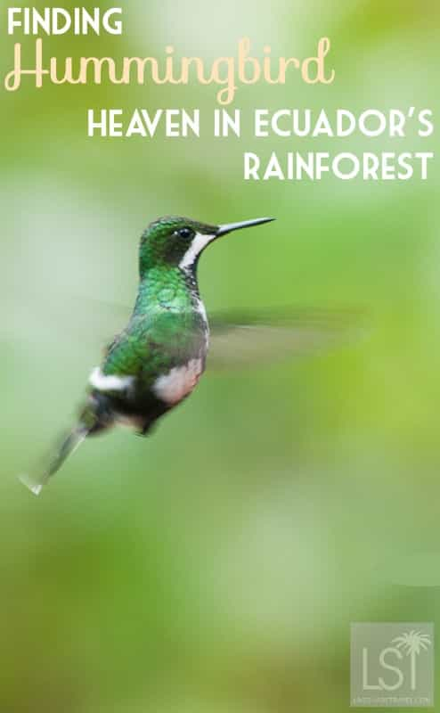 Finding hummingbird heaven at Mashpi Lodge in Ecuador's rainforest