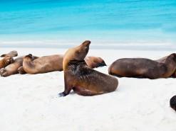 Galápagos Islands – wildlife and wonder in big pictures