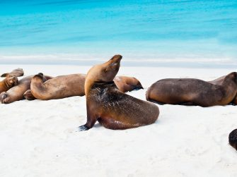 Galápagos Islands – wildlife and wonder in big pictures